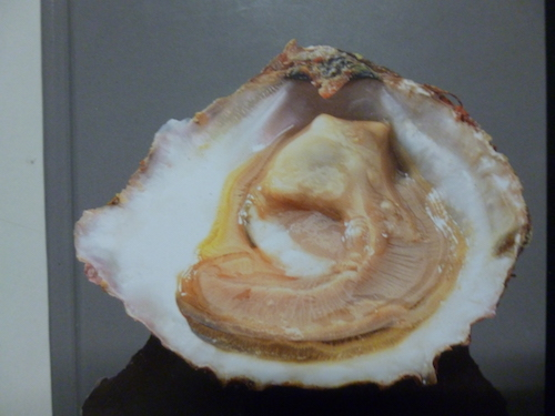 Franse Oesters Viscentrale Fieret Harelbeke