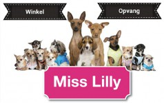 Logo Miss Lilly - Neeroeteren