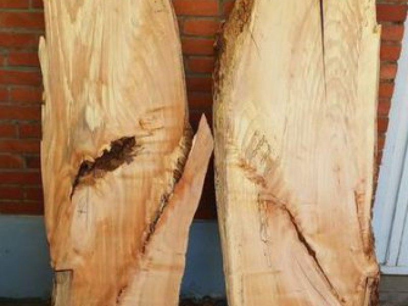 Fotoalbums boomverzorging tree art for Houten decoratie