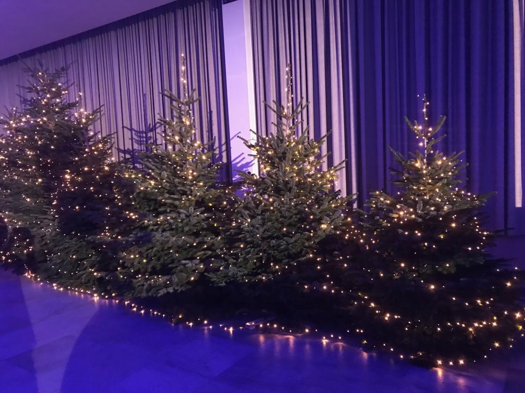 Header Christmas Tree Farm - Kerstdennen Sint-Truiden